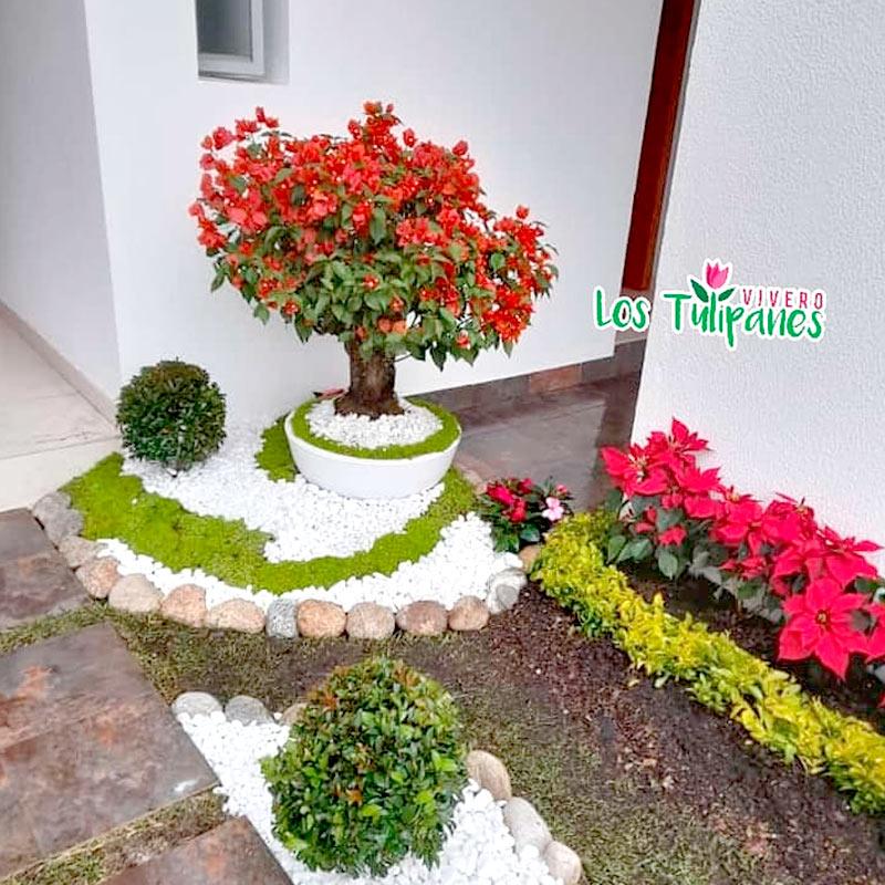 Mantenimiento y Decoración de Jardineras