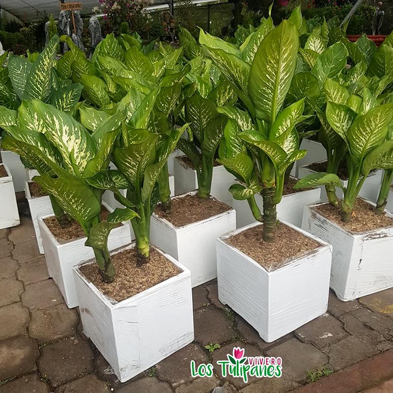¿Qué planta te apasiona?