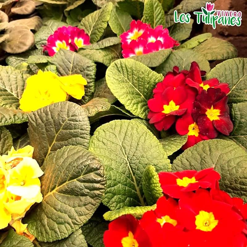 Variedad de Plantas y artículos para decorar tus jardines