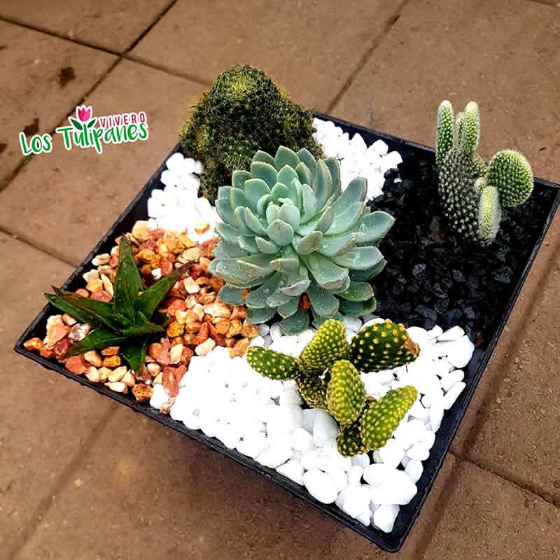 Los cactus son de las plantas más únicas y hermosas