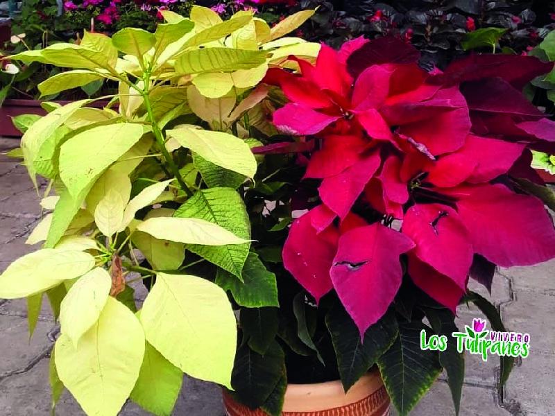 Decora tu Jardin para Navidad