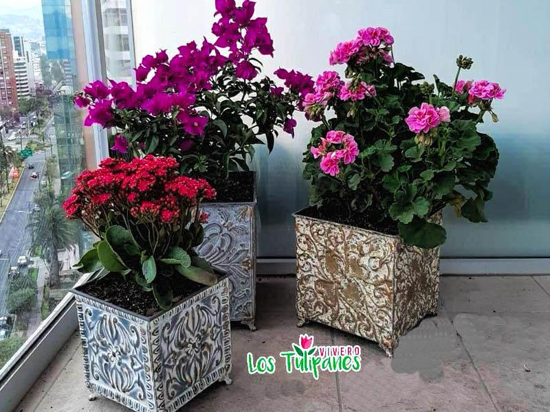 Decoración con Plantas y Accesorios